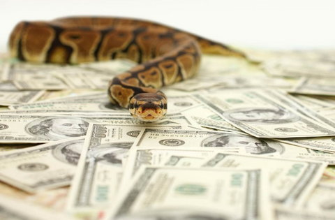 A snake was accused of swallowing N36m in Benue (Illustration. Stock photo).