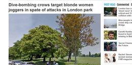 Uwaga! Wściekłe wrony atakują blondynki!