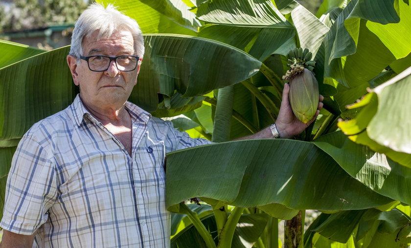 Jacek Gaj hoduje banany w Jaworznie