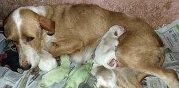 O matko! Urodziła zielone psy!