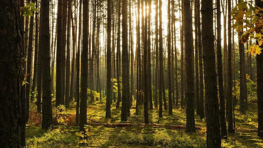 Nocleg w lesie pod namiotem - czy to w Polsce legalne?