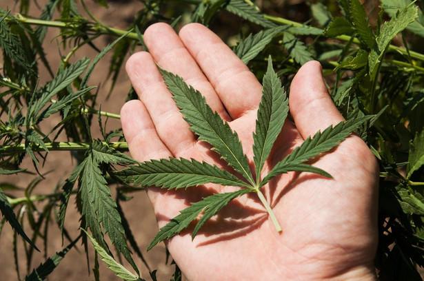 Spectrum Cannabis, która jako pierwsza zarejestrowała w Polsce medyczne konopie, składa doniesienie na policję w sprawie szantażu.