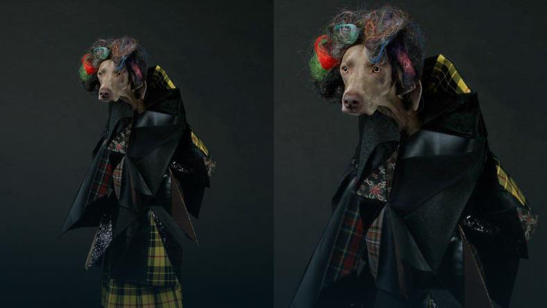 """Wystylizowane psy w """"Vogue"""""""
