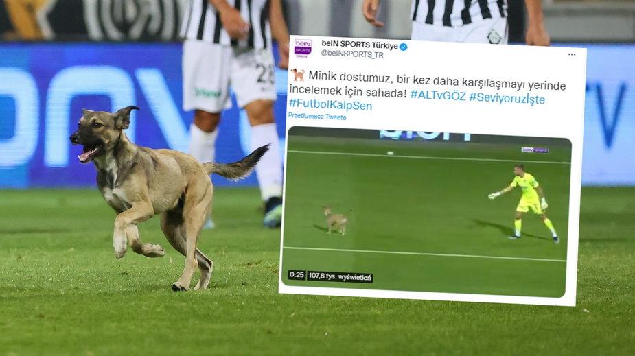 Pies na boisku podczas meczu Altay SK - Goztepe SK