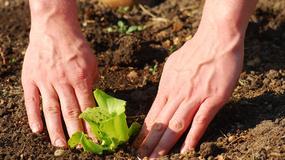 Zakładanie i pielęgnacja ogrodu