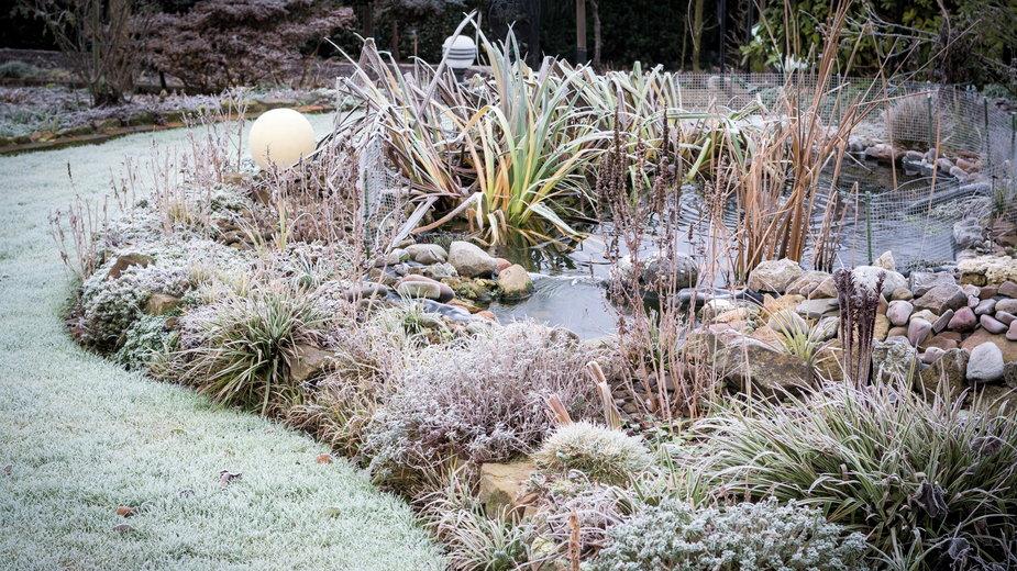 Rośliny, które nie są odporne na mróz należy zabezpieczyć na zimę - Andrea/stock.adobe.com