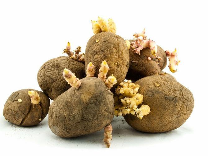 Stalno bacate proklijali krompir jer mislite da nije dobar? Samo uradite OVU STVAR i ješćete ga u slast!