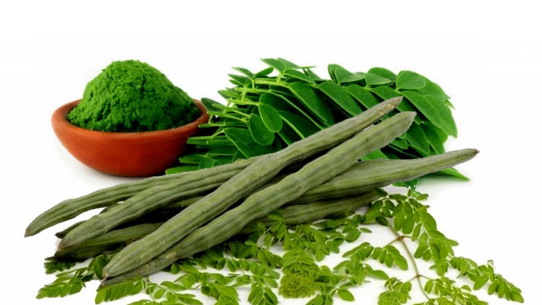 The health benefits of this moringa are unbelievable