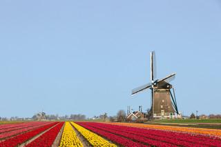 Holendrzy tacy jak Brytyjczycy