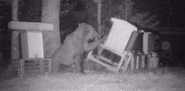 Nie do wiary! Ukryta kamera nagrała niedźwiedzia włamywacza