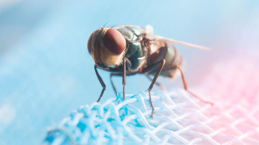 a parazita kezelés megelőzése pinworm férgek és hogyan kell kezelni őket