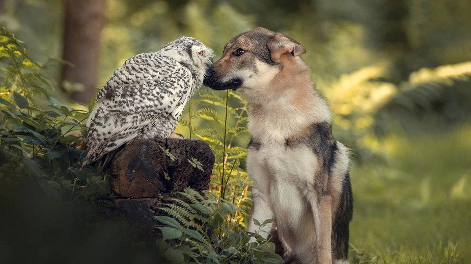 Niezwykła przyjaźń psa i sowy