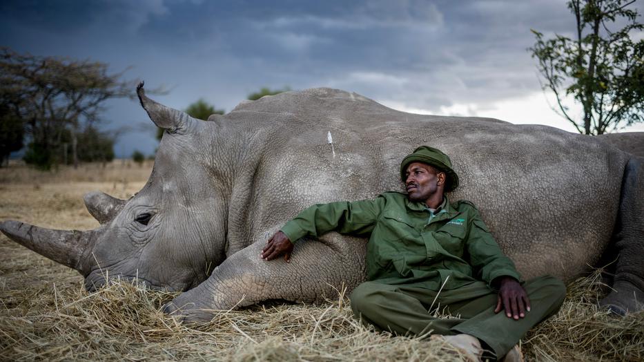 Megható pillanat: a vadőr, Zakaria Kipkirui megpihen barátjával egy nehéz nap után /Fotó: Northfoto