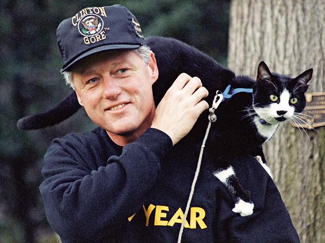 Tokom mandata Bila Klintona, u Beloj kući su živeli i njegovi kućni ljubimci - mačka Soks i labrador retriver boje čokolade Badi