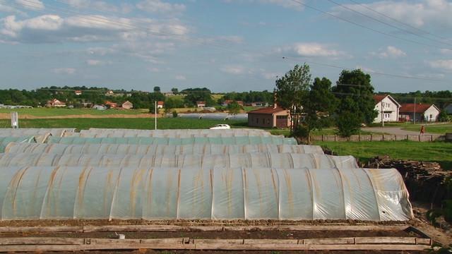 Stojićević na hektaru pod plastenicima godišnje proizvede 60 tona paradajza i 20 tona krastavaca