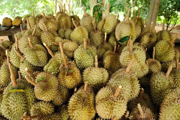 Duriany