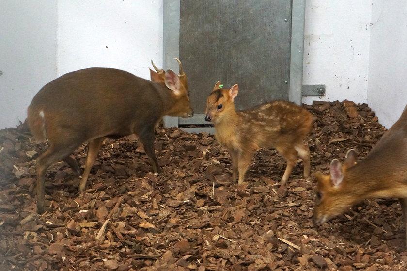 Narodziny w zoo we Wrocławiu