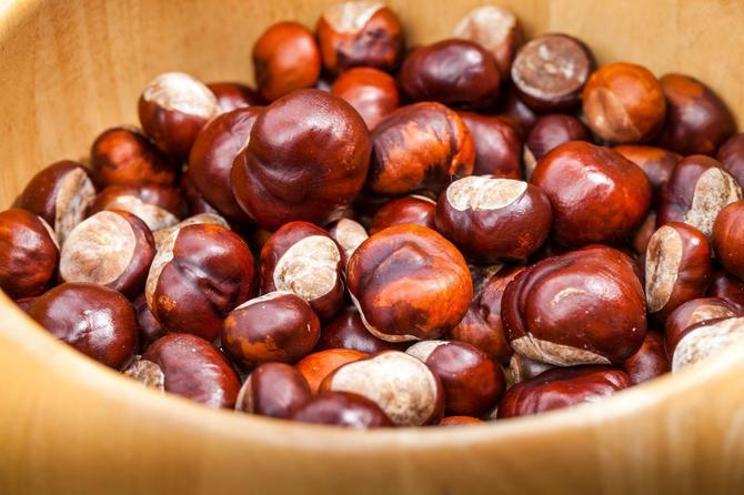 Kesten je jedini orašasti plod koji sadrži vitamin C