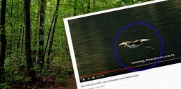 Ale obciach! Lasy Państwowe wydały taką kasę na spot promocyjny, a nie wiedzą, jakie ptaki żyją w Polsce!