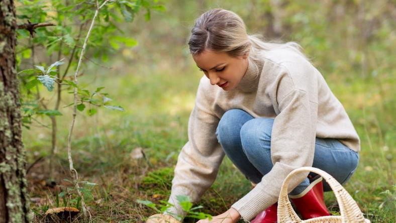 Kobieta zbiera grzyby w lesie. Grzybobranie.