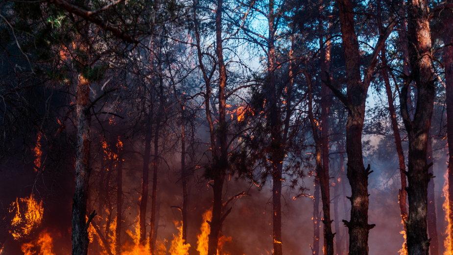 Pożar lasu (zdjęcie ilustracyjne)