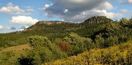 Przyrodnicy posadzili 100 tys. drzew!