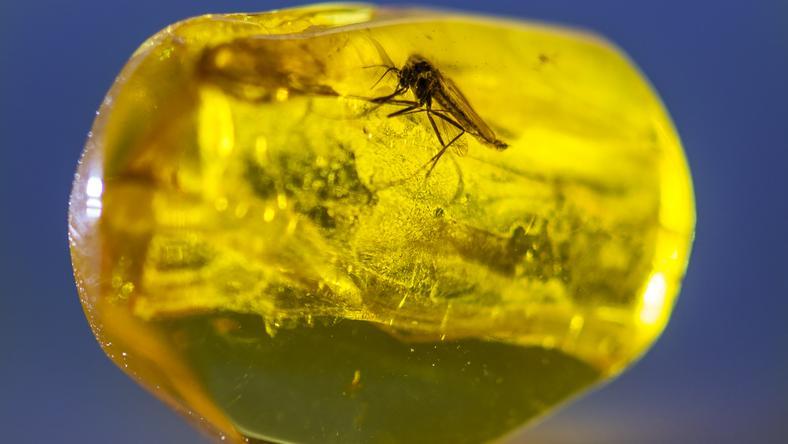 W bursztynie znajduje się m.in. zatopione owady