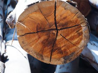 Usunięcie drzewa: Stan zdrowia i dochody wpływają na wymiar kary