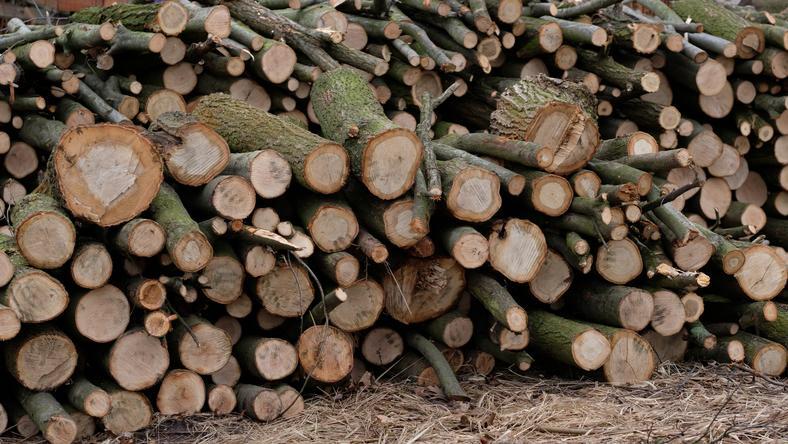 Najbardziej zauważalne jest usuwanie drzew i krzewów w centrach polskich miast - a takich wycinek nie brakuje