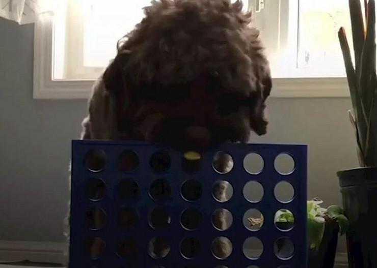 Pas, društvena igra