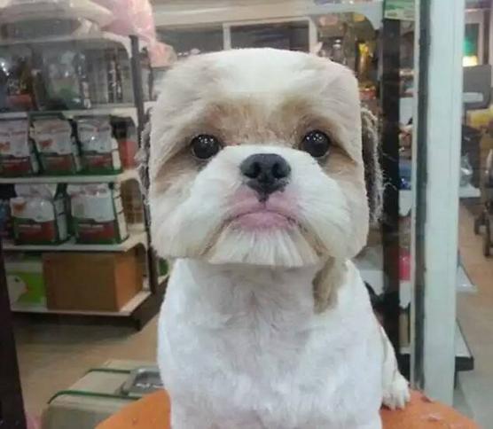 Fryzury Psów W Japonii Psy W Azji