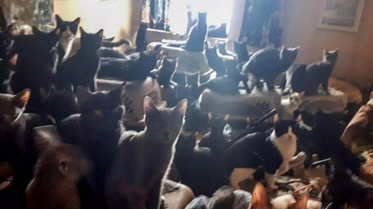 Više od 300 mačaka prtscn