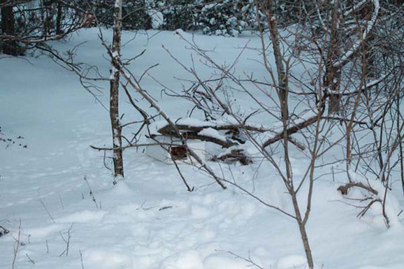 Kada je zavirio, video je tužnu scenu:mače, promrzlo i bolesno, ležalo je kraj zaleđene hrane.