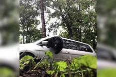 YT_Medved_u_automobilu_vesti_blic_safe