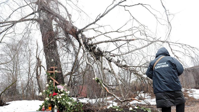 Smoleńskiej brzozy nie przywiozą do Polski