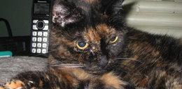 Umarła najstarsza kotka świata. Ile miała lat?
