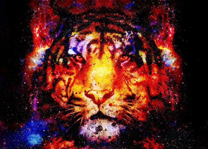 Tigrovi traže žrtve