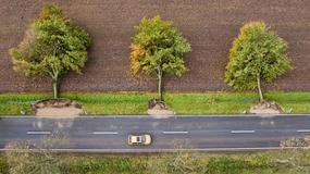 Uchwycone na zdjęciu drzewa stoją czy leżą?