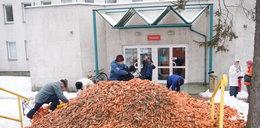Wyłudzili miliony na...marchewkę!