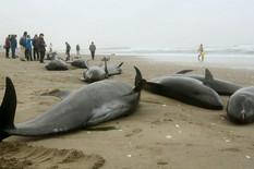 Još se ne znaju razlozi ovog dramatičnog ponašanja delfina