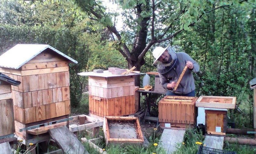 zatrute pszczoły