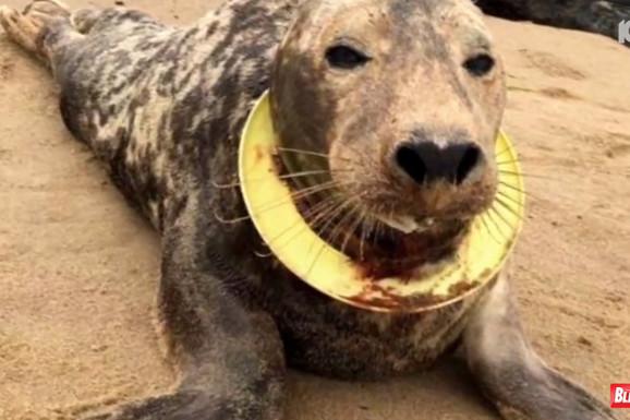 Spasli su život foki, a njena reakcija je NEPROCENJIVA (VIDEO)
