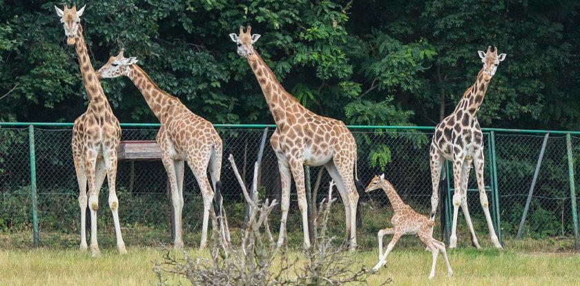 Będziesz mógł odwiedzić zoo
