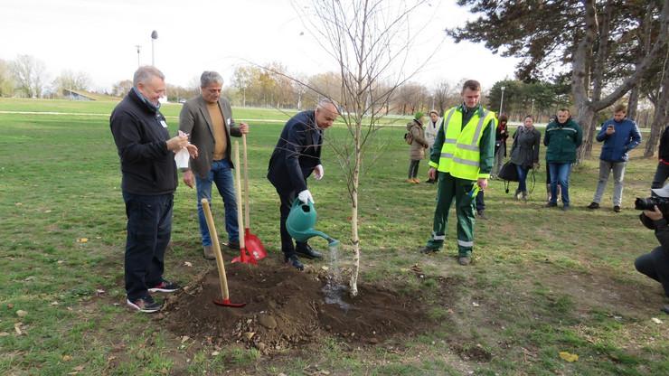sadnja 163 stabla radojičić stanojević GIZ