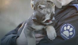 Zmasakrowane zwłoki psa znaleziono w krzakach