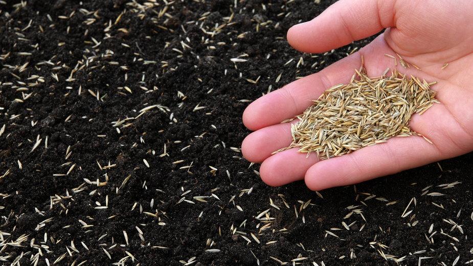 Przed wysianiem nasion trawy należy odpowiednio przygotować podłoże -  photka/stock.adobe.com