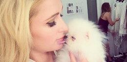 Fanaberia gwiazdy! Kupiła psa za 40 tys. zł!