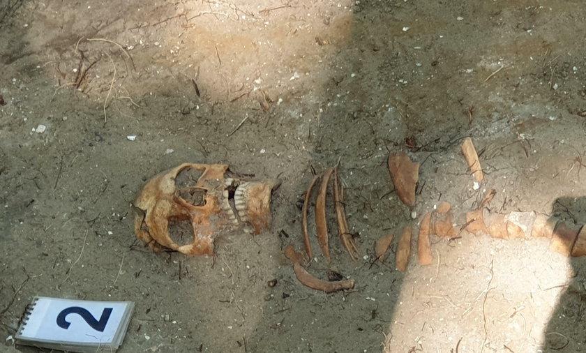 Szczątki polskiego żołnierza odkryte na Westerplatte