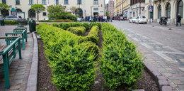 Uprawiali seks w centrum Krakowa. Interweniowała straż miejska