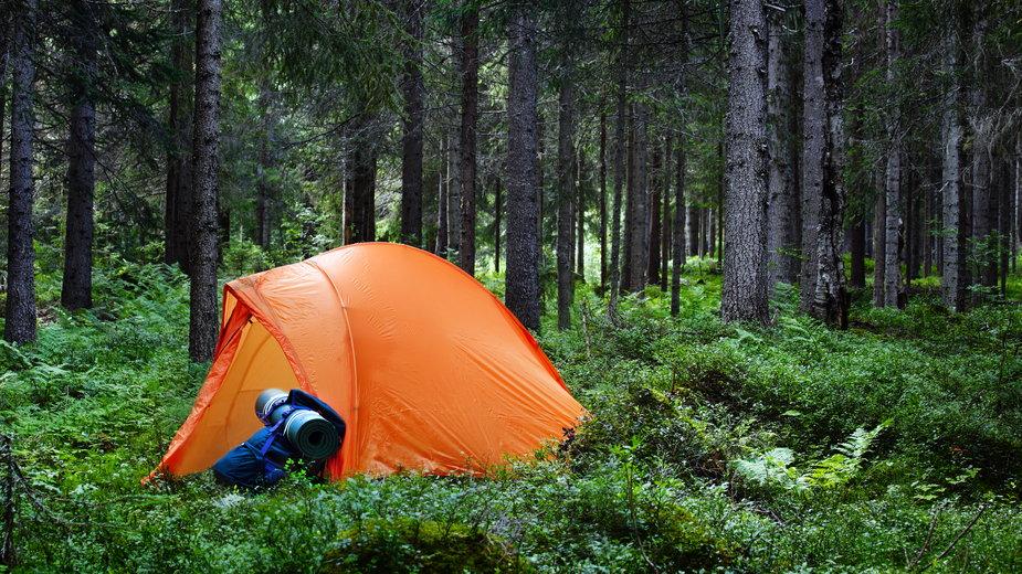 Nocowanie w polskich lasach możliwe od 1 maja